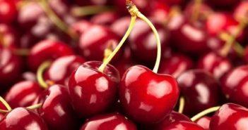 """POWRÓT PORAD JANA OGRODNIKA. Czereśnie i wiśnie, po angielsku """"cherries"""""""